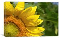 Sunflower Yellow, Canvas Print