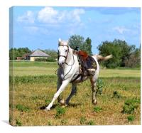 White Horse cantering, Canvas Print