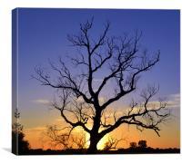 Dead Tree Silhouette, Canvas Print