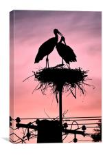 Stork Red Sunset Silhouette, Canvas Print