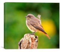 Bird Bokeh, Canvas Print