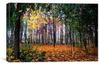 Colours of Autumn, Canvas Print