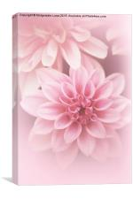 Beautiful, artistic pink dahlia, Canvas Print