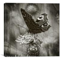 Butterfly Bw, Canvas Print