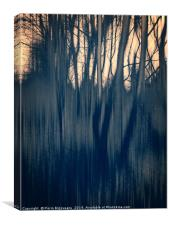 Tinted Woods Bw, Canvas Print