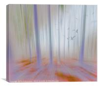 Moving Forest Light, Canvas Print