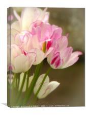 """Soft Tulips"", Canvas Print"
