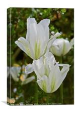 Tulipa Spring Green, Canvas Print
