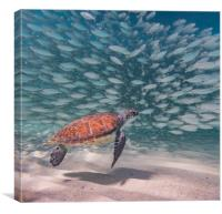 Snorkelling at Westpunt  Curacao View , Canvas Print