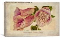 Foxglove Textures, Canvas Print