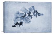 Digitalis purpurea (Common Foxglove) Cyanotype, Canvas Print