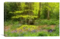 Soft Spring Colours in a woodland setting. , Canvas Print