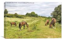 Cissbury Ring Ponies, Canvas Print