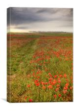 Vast red poppy fields at dawn, Canvas Print