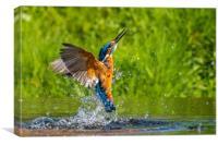 kingfisher (Alcedo atthis) , Canvas Print