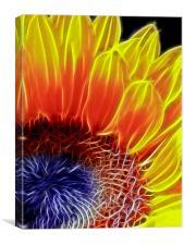 Sunflower, Canvas Print