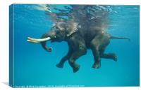 Swimming elephant, Canvas Print
