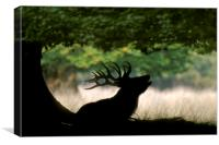Red Deer Stag bellowing under Tree, Canvas Print