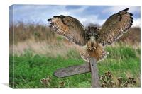 Eagle Owl landing on Signpost, Canvas Print