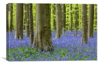 Bluebells in Beech Forest, Canvas Print