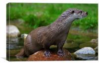 River Otter, Canvas Print