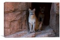 Mountain Lions in Cave, Canvas Print