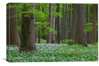 Wood Garlic in Beech Forest, Canvas Print