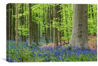 Bluebells in Spring Forest, Canvas Print