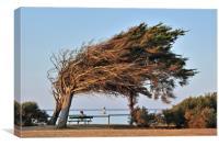 Windswept Tree at Ile d'Oléron, Canvas Print