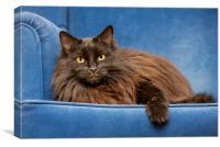 Black Persian Longhair Cat in Sofa, Canvas Print