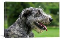 Irish Wolfhound, Canvas Print