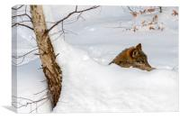 Lone Wolf in the Snow, Canvas Print