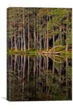 Abernethy Forest, Canvas Print