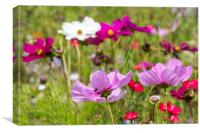 Colourful Wildflowers, Canvas Print