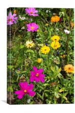 Wildflowers in meadow, Canvas Print