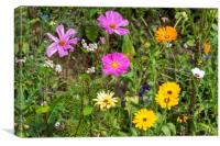 Colorful Flowers in Field, Canvas Print