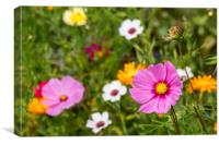 Color Wildflowers in Meadow, Canvas Print