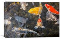 Colourful Koi Fish, Canvas Print