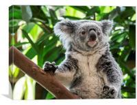 Cute Koala in Tree, Canvas Print