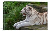 White Tiger, Canvas Print