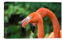 American Flamingos, Canvas Print