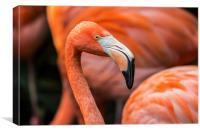 Caribbean flamingos, Canvas Print