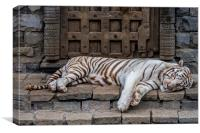 White Tiger in Indian Temple, Canvas Print