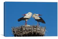 White Storks Displaying on Nest, Canvas Print