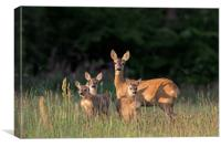 Roe Deer Female with Three Fawns, Canvas Print
