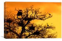 Heronry at Sunset, Canvas Print