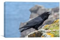 Raven in Scotland, Canvas Print