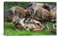 Wolf Pack, Canvas Print