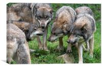 Welcome in the Wolf Pack, Canvas Print