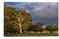 Dead Oak Tree, Canvas Print